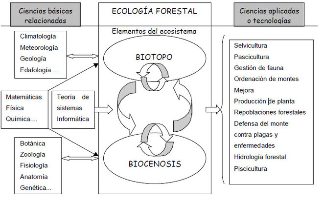 Esquema de las relaciones de la ecología forestal con otras ciencias