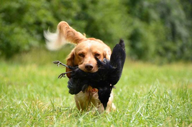 Mit Antijagdtraining gegen starken Jagdtrieb beim Hund