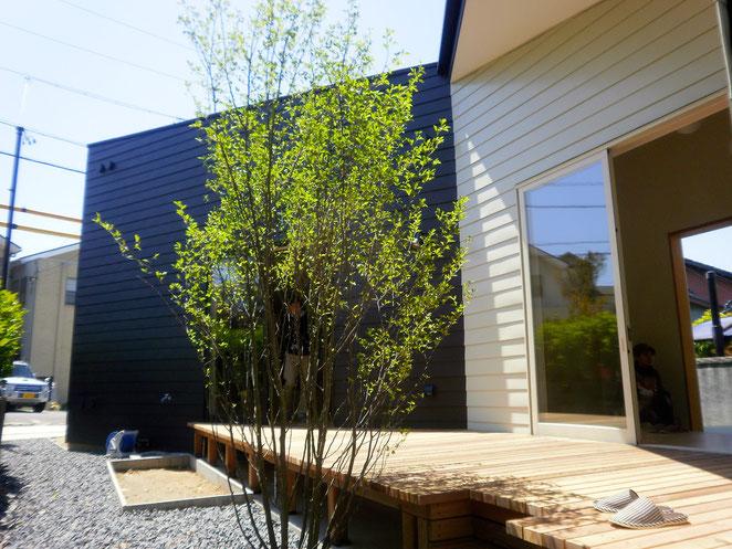 黒い外壁と葉の緑のコントラストもいいですね