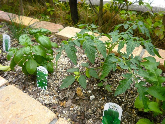 野菜の専門家が造る家庭菜園・ハーベストガーデン