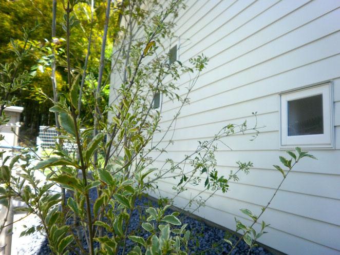 壁の白に葉の緑が映えますね