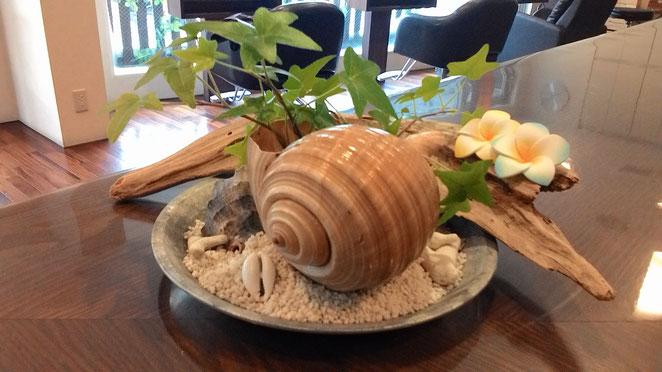柏市逆井美容室プロロ貝の植木鉢