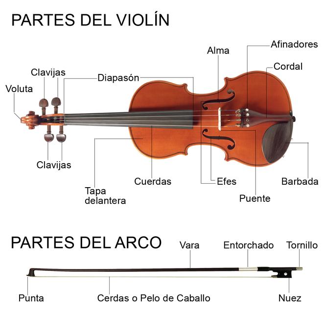 Foto 1: Partes de un violín