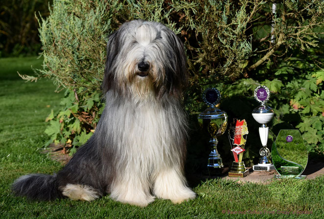 Bearded Collie, Bundesjugensieger 2017