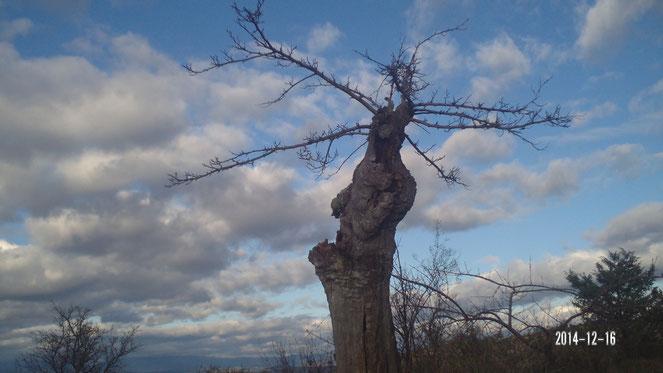 la couronne de bois