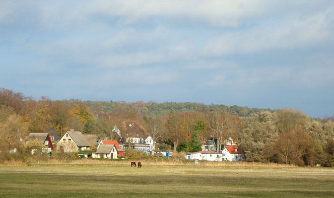 Insel Hiddensee | Kloster mit Pferdeweide und Häusern
