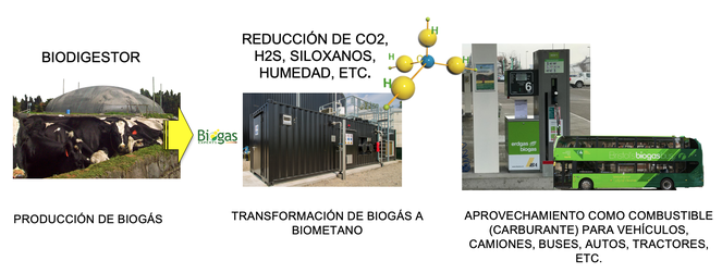 Biometano - biogás - producción de biometano a partir de biogas - combustible renovable - biomethane