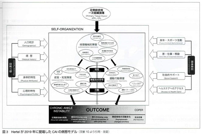慢性足関節不安定症の病態モデル