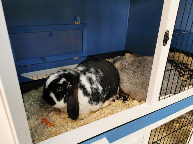 Das ist Luki, der brave Hase. Die freche Polly mag nicht einmal in die Kamera schauen.