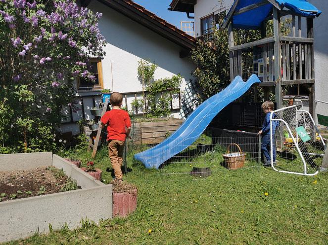Da wir keinen Platz für einen Rasenmäher haben, mussten heute die Hasen ran.