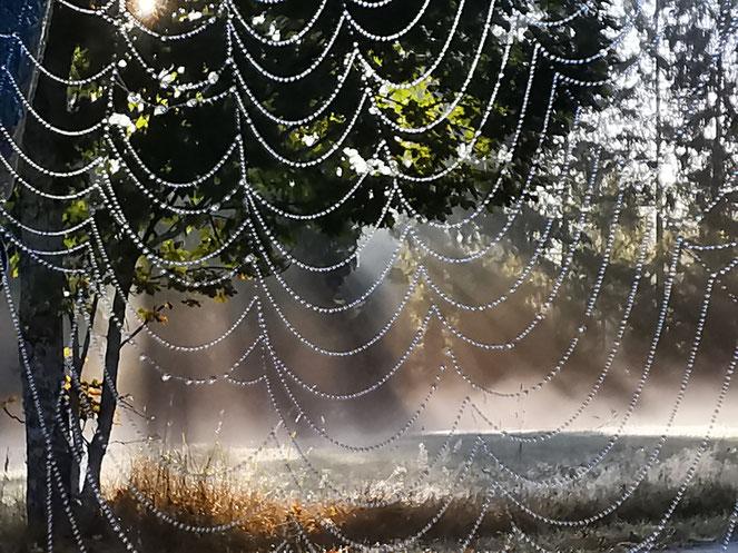 Spinnennetz Tautropfen Altweibersommer