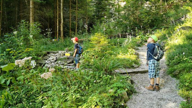 Der Pidinger Bergblumengarten