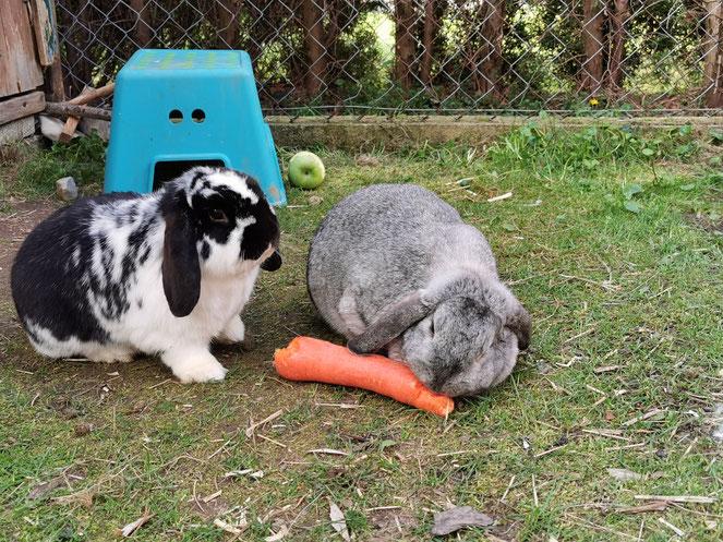 Wir und unsere beiden Mitbewohner Luggi und Polly, wünschen Frohe Ostern!