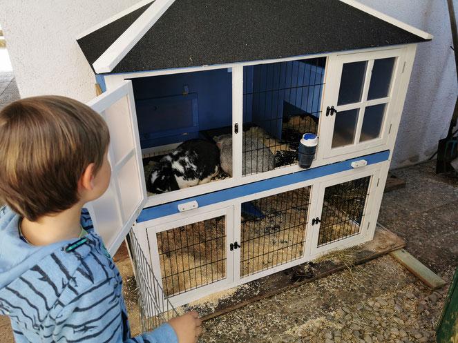 Unser neuer Hasenpalast