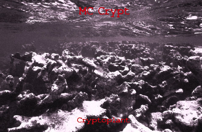 MC CRYPT - CRYPTOPLANT