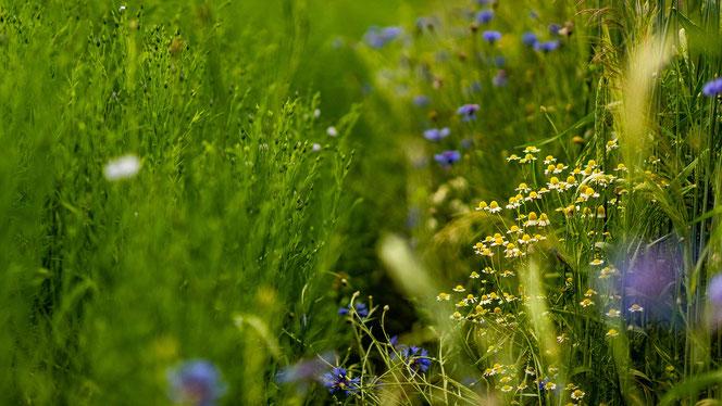 Biodiversität Dürig Gärten
