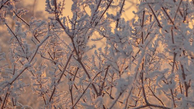 Winterschnitt Murten