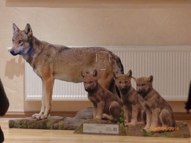 Wolf mit Welpen