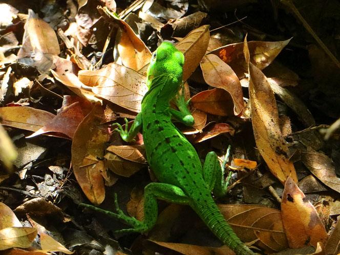 Costa Ricas Tier- und Pflanzenwelt ist ein Erlebnis!