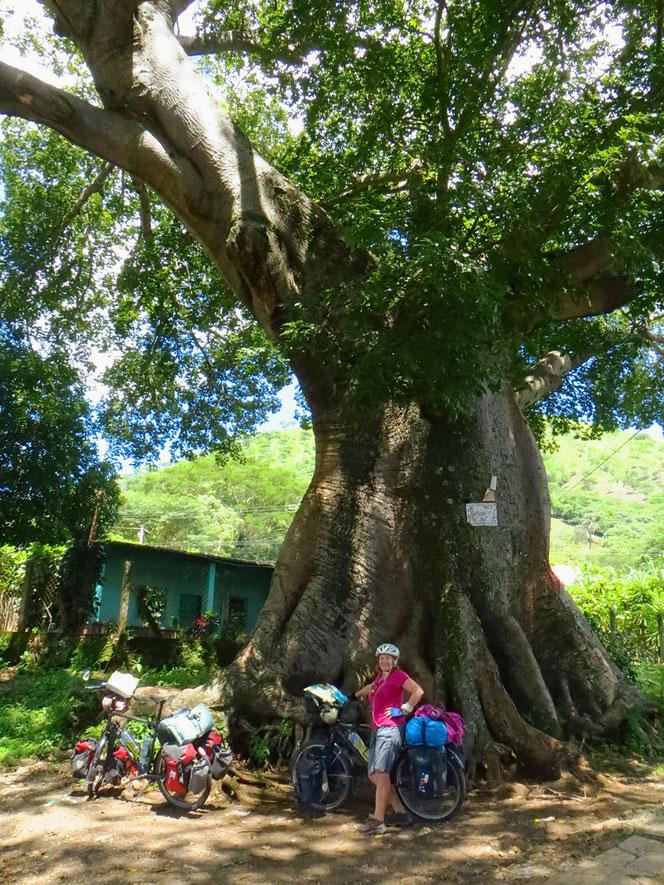 El Salvador, für uns das Land der grossen Bäume!