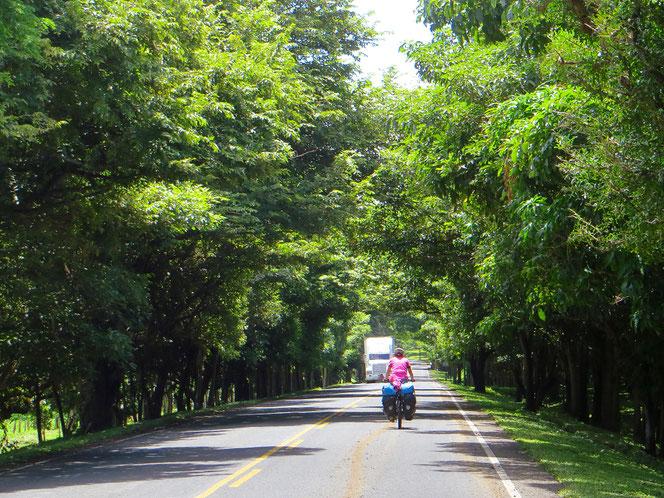 Pedalen im grünen Tunnel (vor der Grenze zu Costa Rica).