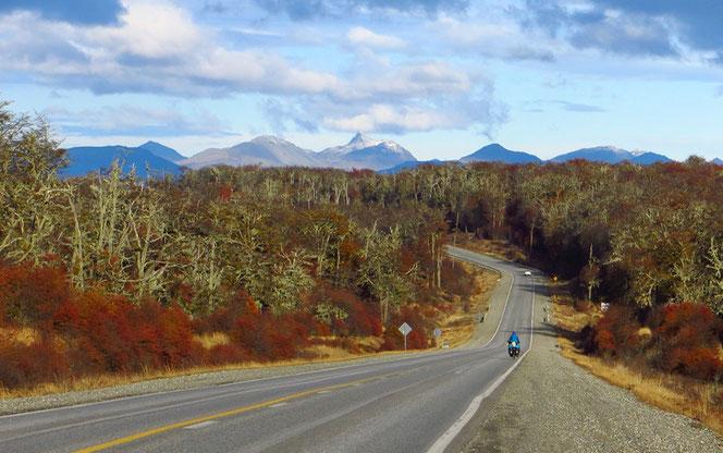 Auf den letzten 150 Kilometern bis Ushuaia gibt es wieder viel Wald.