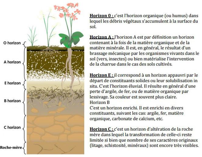Coupe schématique du sol et sous-sol. Source: cliquer sur l'image