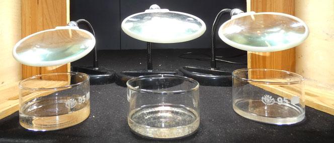 links: Salinenkrebsnauplien; mitte: Wasserflöhe; rechts: Grindal
