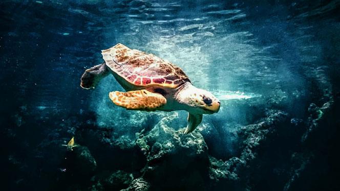 Schildpadden kunnen meer van de weg vertellen dan hazen ~ Kahlil Gibran