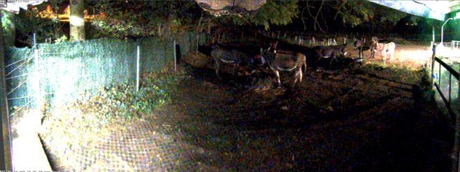 Live-Cam in der Nacht - meine Esel am Zaun haben ein Licht durch einen Bewegungsmelder ausgelöst