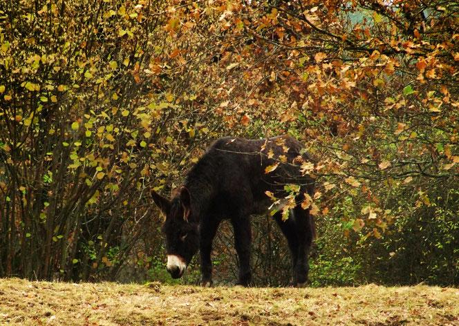 Léon auf der Weide