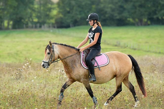 Cours d'équitation, de l'initiation à la compétition à proximité d'Auxerre