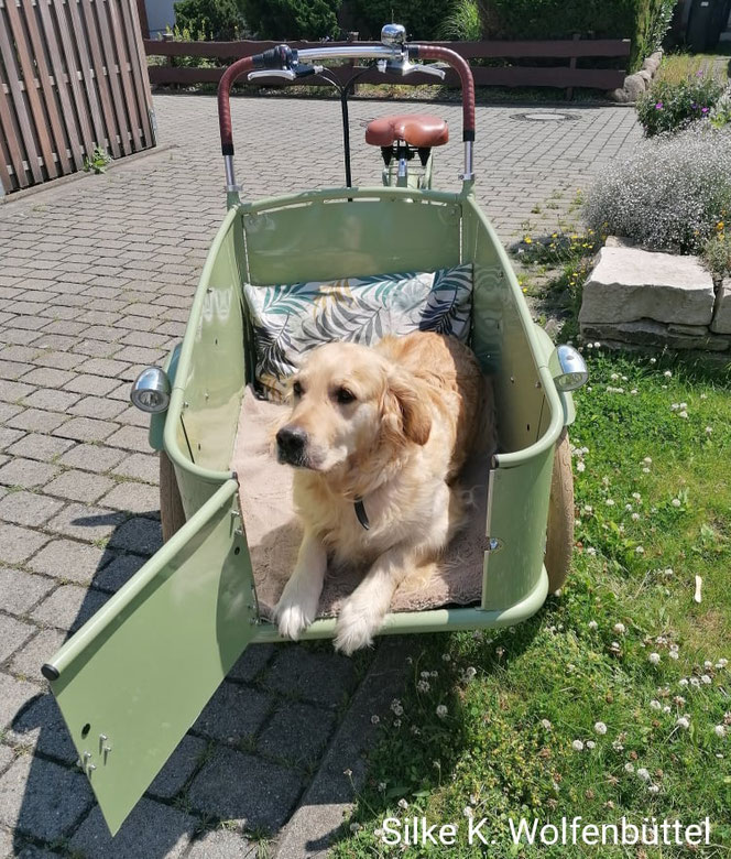 Danke Ihnen, Silke, für das tolle Bild von ihrem JohnnyLoco Lima mit dem Namen Lottje und ihrem Hund Laika.