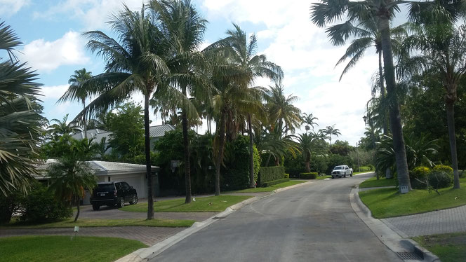 Picture of a sleepy town road lined lined by palm and other trees