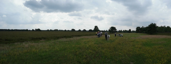 Eselwanderung Nemitzer Heide