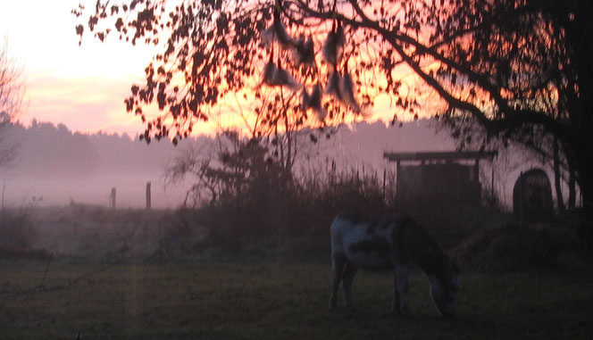 Sonnenaufgang mit Esel im Wendland