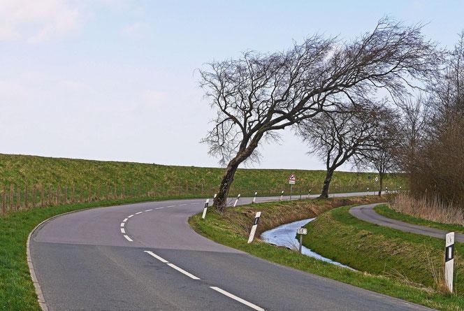 Schiefe Bäume am Deich (Foto: Pixabay)