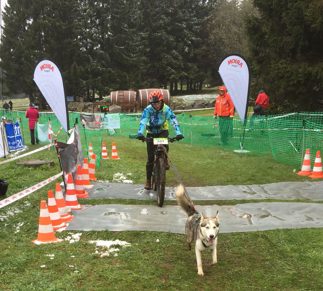 Zughundesport - Bikejöring