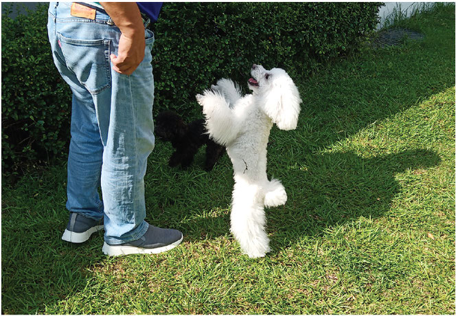 天然芝のドッグランではしゃぐ犬