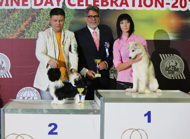 Kennel news from 2014 - siberian husky kennel from Ukraine