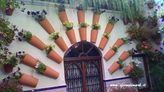 Los Patios De Cordoba The Most Coloured Flowery Contest And The