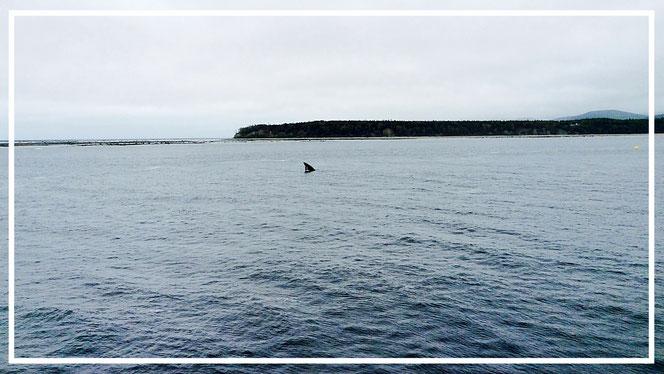 Tadoussac Whale Watching Kanada