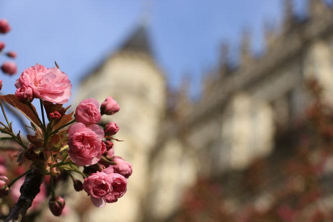 La Ruelle des Jardins au Pays des Châteaux et jardins de la Loire@k.Piquet