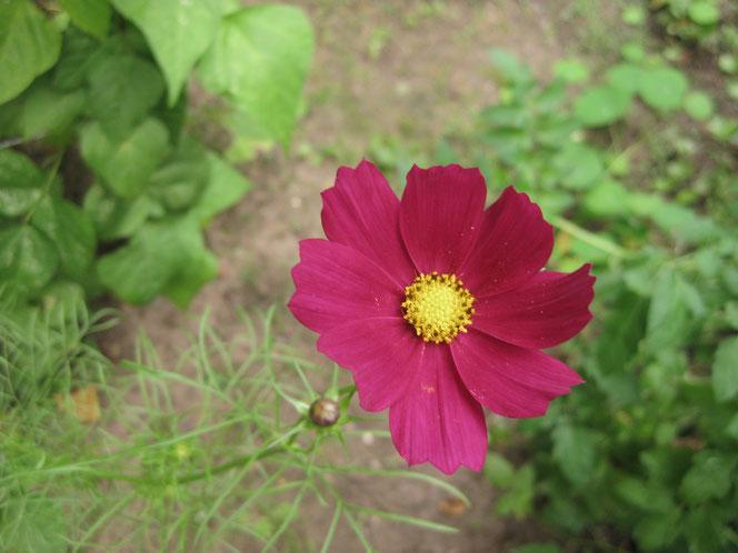 copyright www.birthe.eu Birthe Sülwald Herbstblumen 7