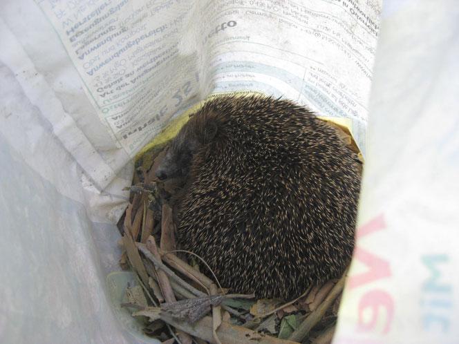 copyright www.birthe.eu Birthe Sülwald Igel-Nest 3