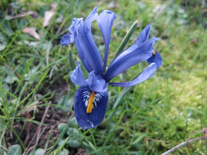 copyright www.birthe.eu Birthe Sülwald Frost