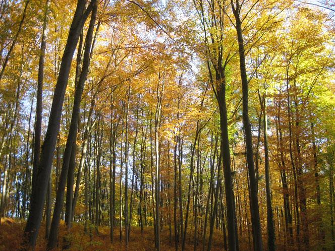 copyright www.birthe.eu Birthe Sülwald den Herbst genießen 2