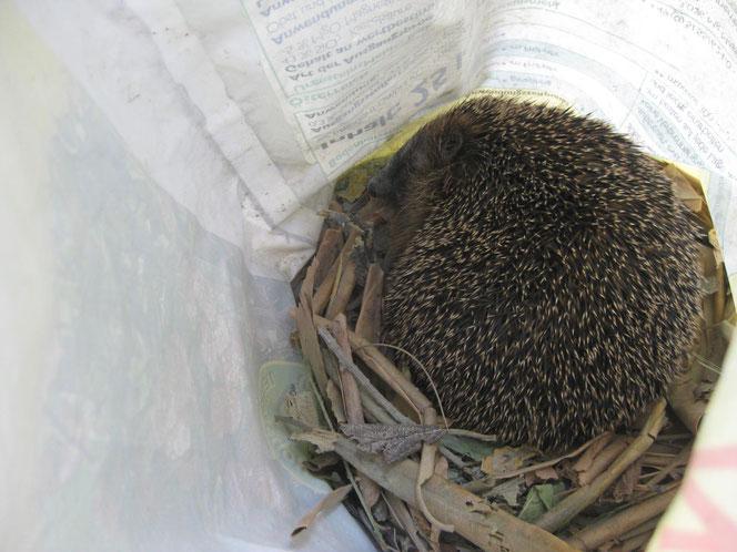 copyright www.birthe.eu Birthe Sülwald Igel-Nest 5