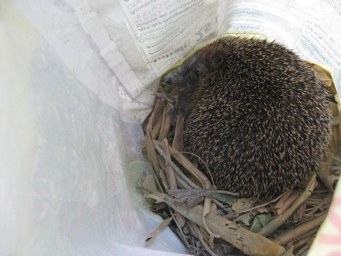 copyright www.birthe.eu Birthe Sülwald Igel-Nest 1