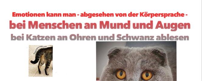 Emotionen kann man bei Menschen an Mund und Augen ablesen, bei Katzen an Ohren und Schwanz. Die Zucht von Katzen mit gefalteten  Ohren und Katzen ohne Schwanz bezeichnet man  als Qualzucht.